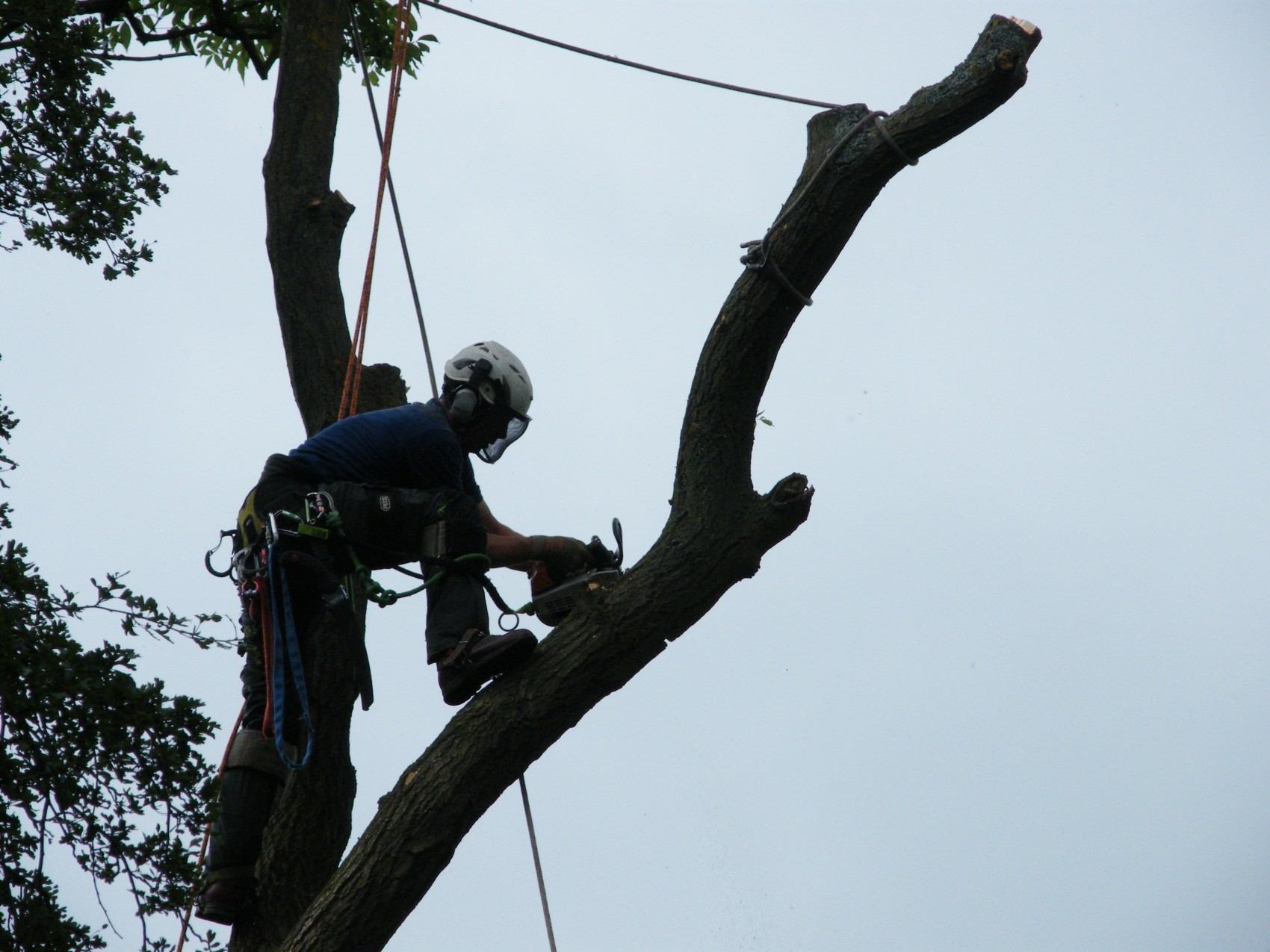 Tree Felling and Dismantling